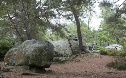 Fontainebleau1